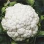 Cauliflower Helsinki F1 Plants