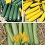 Courgette Plant Collection