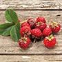 Framberry Plants