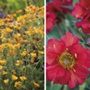 Geum Collection