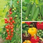 Grafted Mixed Vegetable Plant Collection Pack