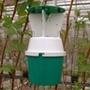 Raspberry Beetle Trap