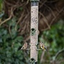 Ring-Pull™ Click Seed Feeder (Large)