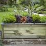 Cambridge Wooden Garden Planter 150 x 50cm