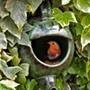 Robin Ceramic Teapot Nester