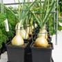 Easy2Grow Irrigation Kit