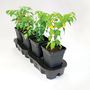 Quadgrow Watering System 8 pots