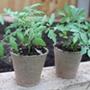 Bio-degradable Jiffy Pots
