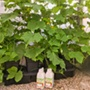 Quadgrow Pots Watering System, 4 Pot
