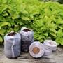 Coco Grow Pure Coir Seed Germination Dots