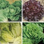 Lettuce Collection