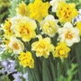 Double Narcissi Bulb Mix