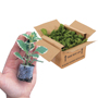 Plant Despatch Box