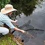 PondGuard Pond Protectors