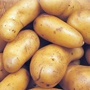 Potato (Extra Early) Lady Christl