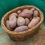 Potato (Early Maincrop) Sarpo Blue Danube