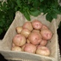 Potato Kerr's Pink (Maincrop)
