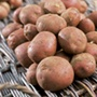 Potato Setanta (Maincrop)