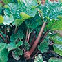 Rhubarb Victoria Crowns