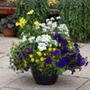 Nautical Chic Container Mix Plants