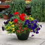Primary Fun Container Mix Plants