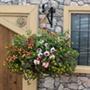 Multi-Coloured Basket Mix Plants