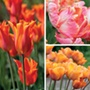 Scented Tulip Bulb Collection