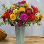 Zinnia Giant Cut Flower Mixed Plants