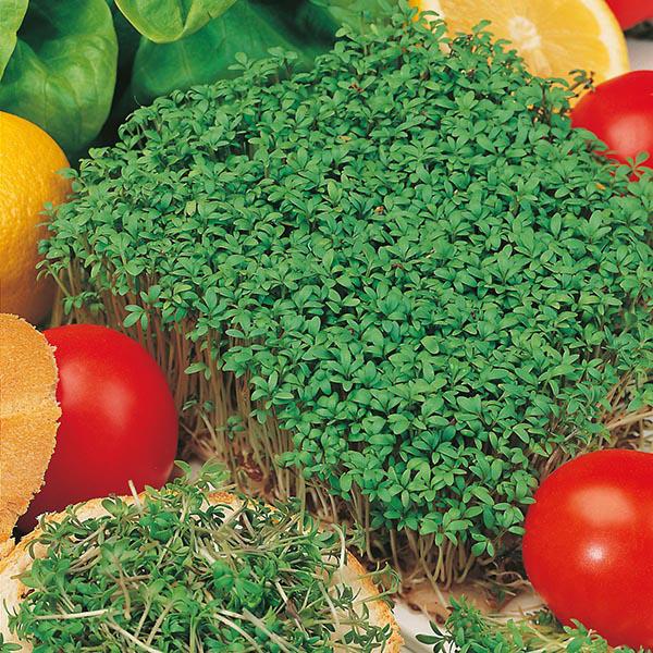 Fothergill/'s 10865 Cress Fine Curled Salad Leaves Seeds Mr