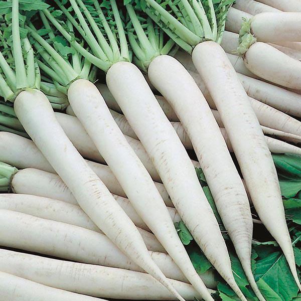 Mooli Paratha Recipe & Benefits of it