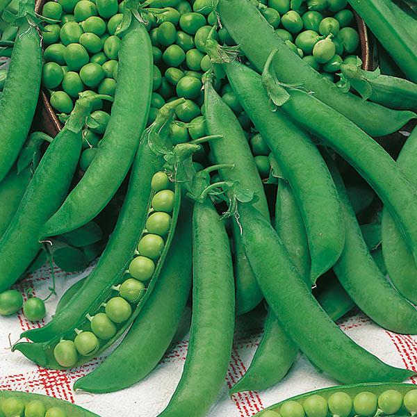 David Domoney Get Growing Pea Petit Pois Seeds