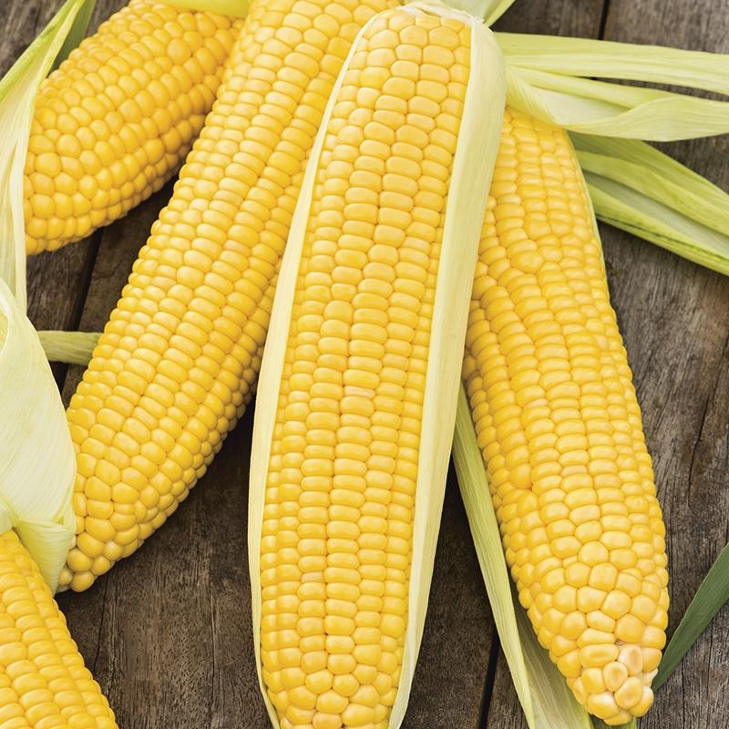 Sweet Corn Incredible F1 Seeds