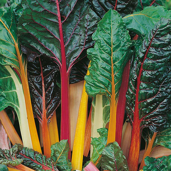how to grow swiss chard from seed uk