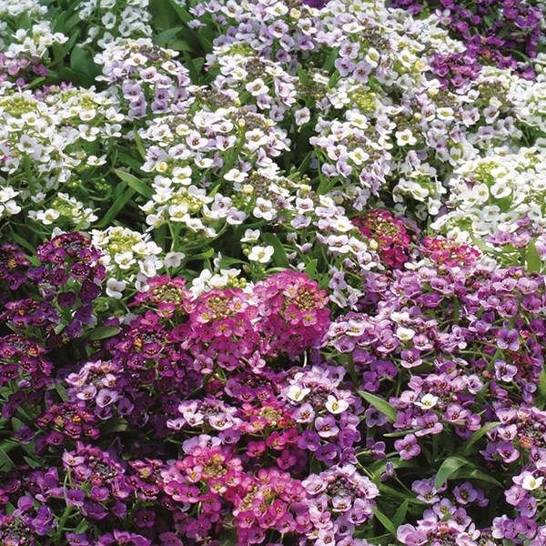 Golf Flowers