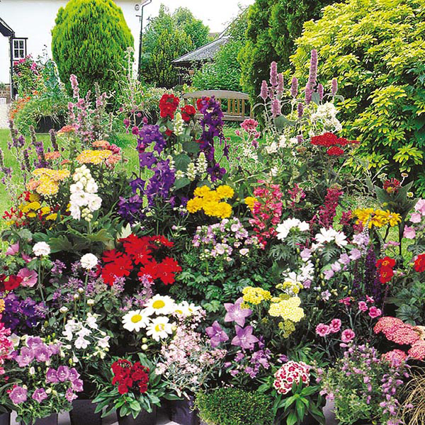 Mixed perennials seeds from mr fothergills seeds and plants mixed 1st year flowering perennial seeds mightylinksfo