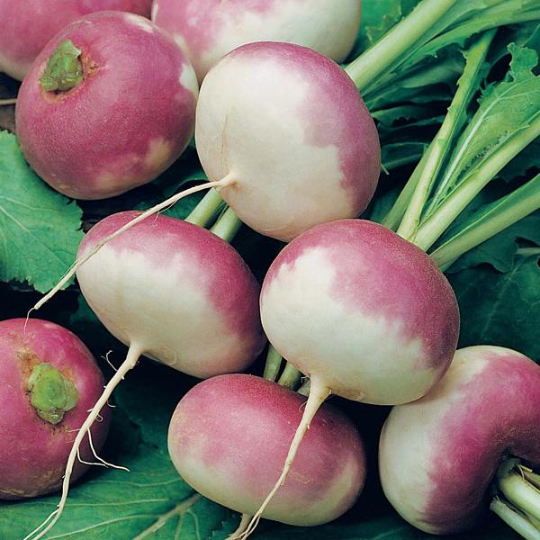 Mr Fothergills David Domoney Turnip Purple Top Milan 1750 Seeds Vegetable