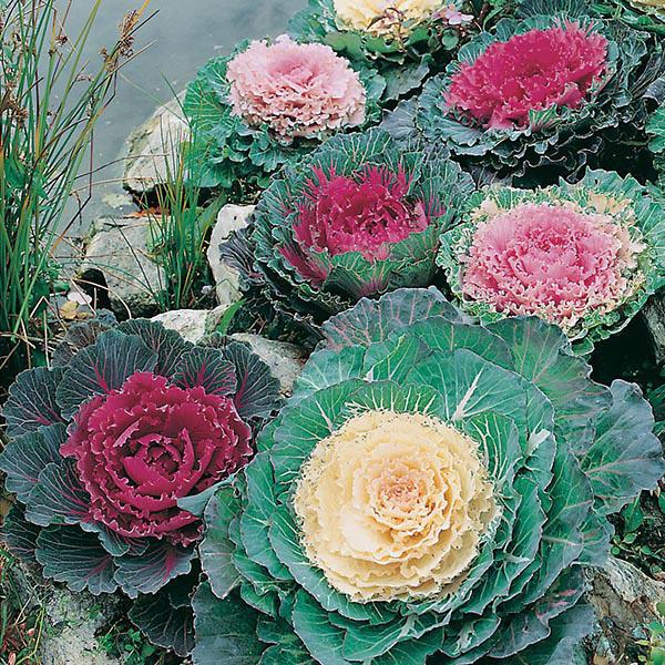 Planting Vegetable Seeds Outside