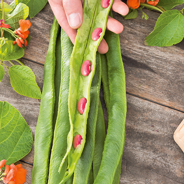 recipe: runner beans seeds [8]
