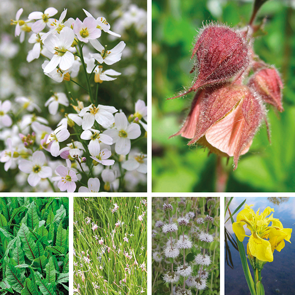 Aquatic plant native collection from mr fothergill 39 s seeds for Native pond plants