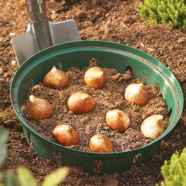 Flower Bulb Baskets : Bulb planting basket tray pack of rectangular cm
