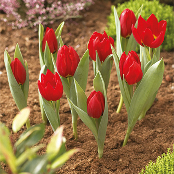 Flower Bulb Baskets : Bulb planting baskets pack of round cm from mr