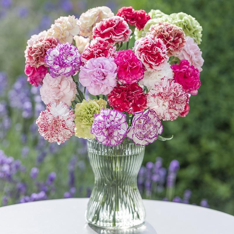 Carnations Garden