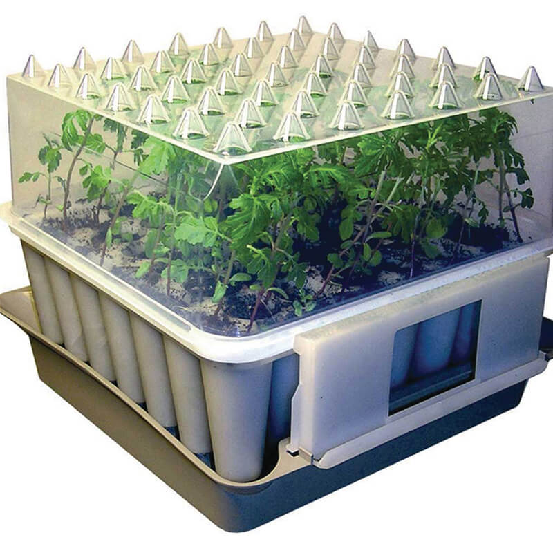 compact plug plant trainer from mr fothergill 39 s seeds and plants. Black Bedroom Furniture Sets. Home Design Ideas
