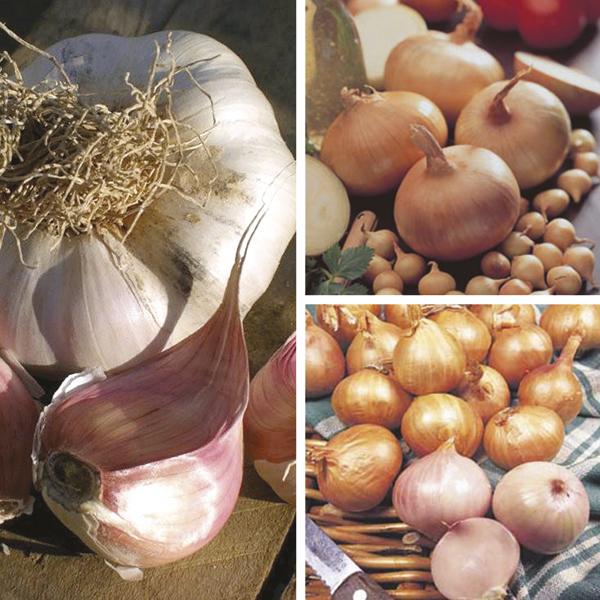 Spring Planting Onion Shallot And Garlic Collection From