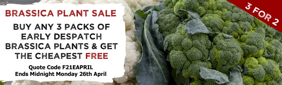 3 FOR 2 On Early Despatch Brassica Plants