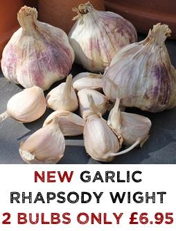 Garlic Rhapsody Wight Bulbs