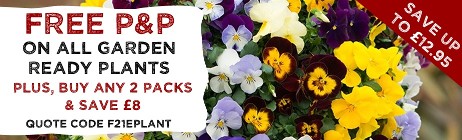 FREE P&P on ALL Garden Ready Bedding Plants