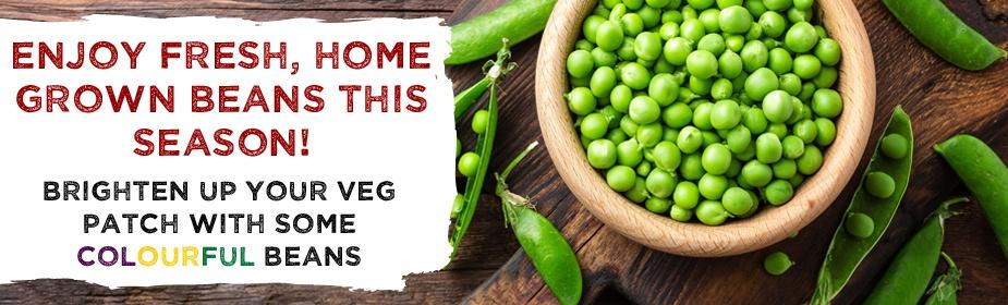 Bean Vegetable Plants