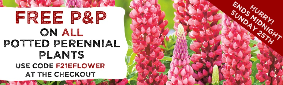 FREE P&P on ALL Potted Perennials
