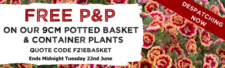 FREE P&P on Basket & Container Plants